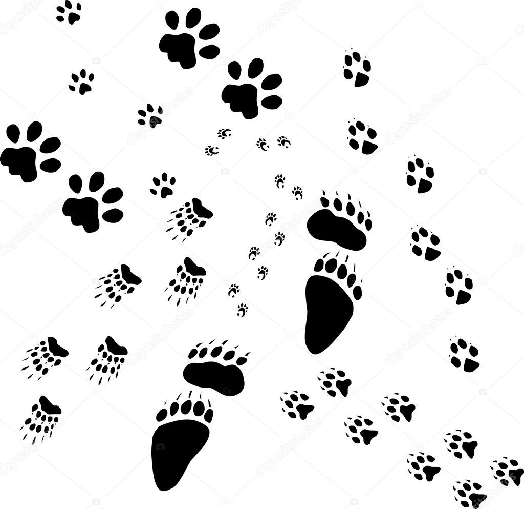 Old Animals Tracks