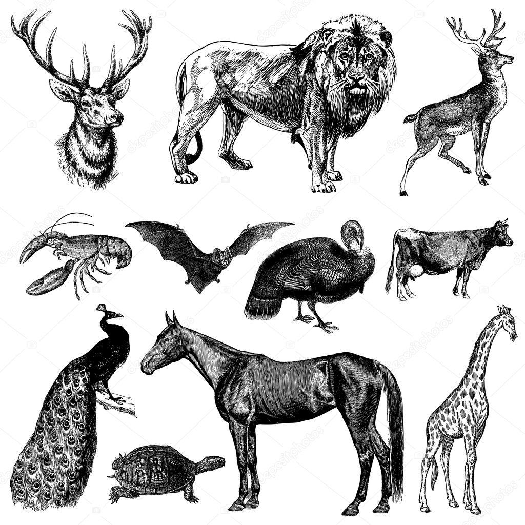 Vector Vintage Animal Set — Stock Vector © createfirst