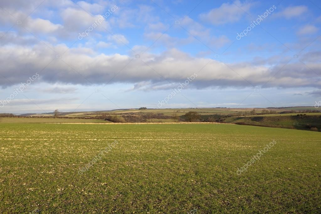 paesaggi agricoli  Foto Stock  emjaysmith 37978567