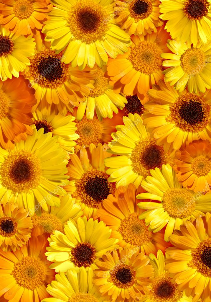 Gallery For Gt Yellow Floral Background
