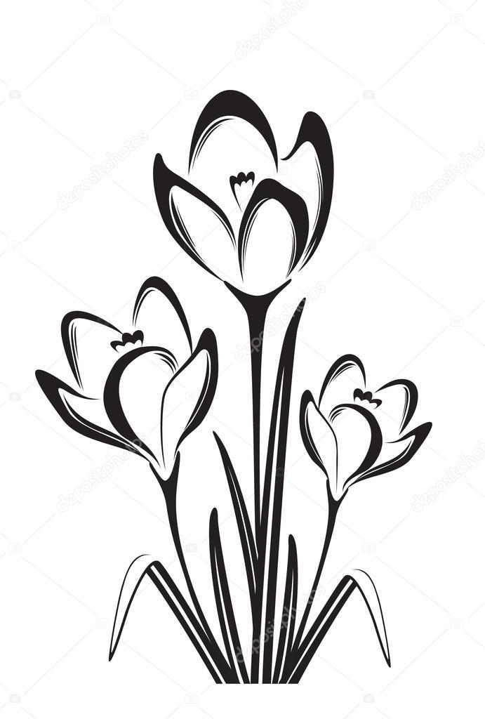 Black and white drawing of crocus — Stock Vector © matik22