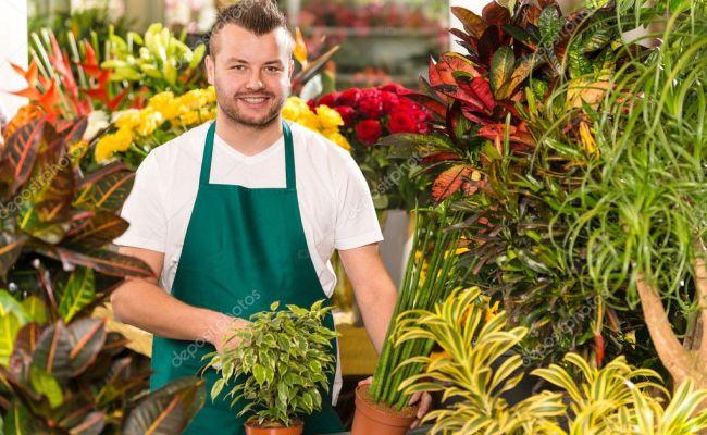 Happy Male Florist Working Flower Gardening Shop Stock