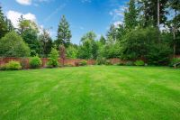 Green large fenced backyard with trees.  Stock Photo ...