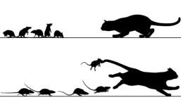 Ratten jagen kat — Stockvector