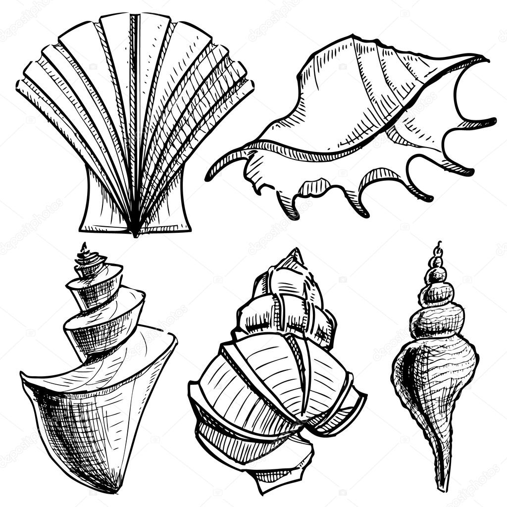 Sea shells collection. Hand drawing sketch vector