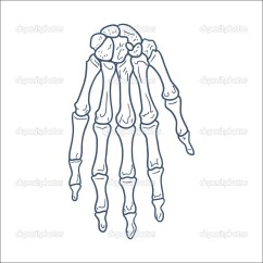 Wrist And Hand Unlabeled Diagram Fender Jazz Bass Wiring Bones Of Skeleton Part Isolated On White  Stock