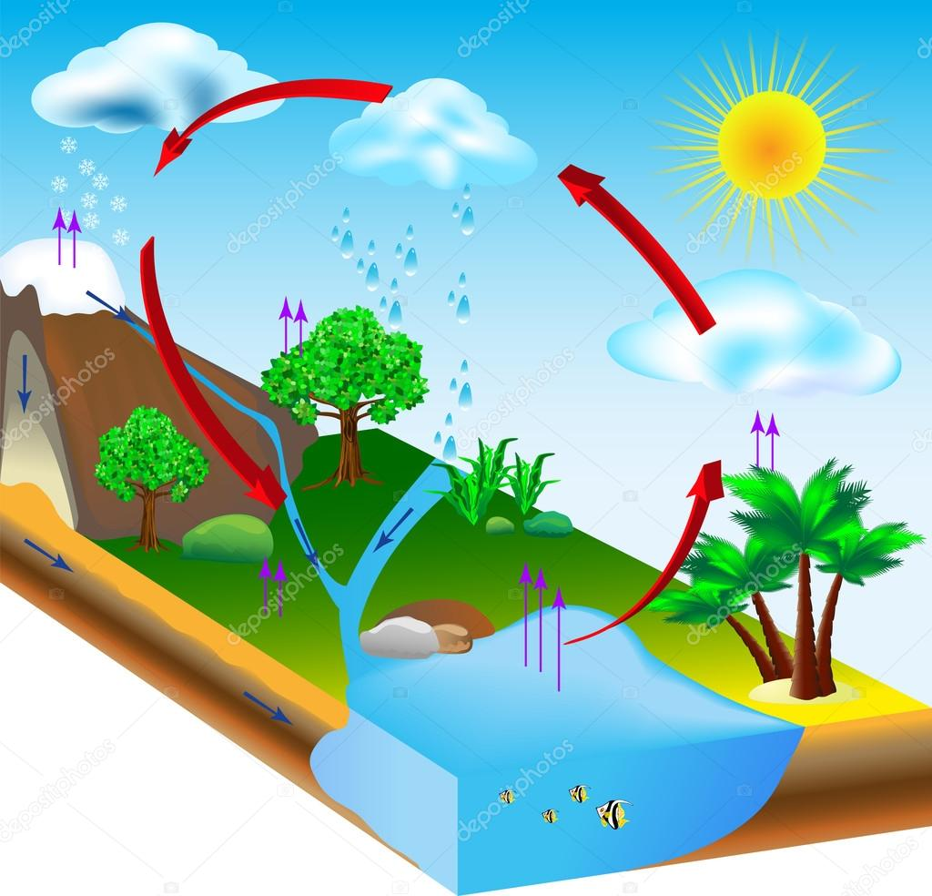 illustration water cycle diagram