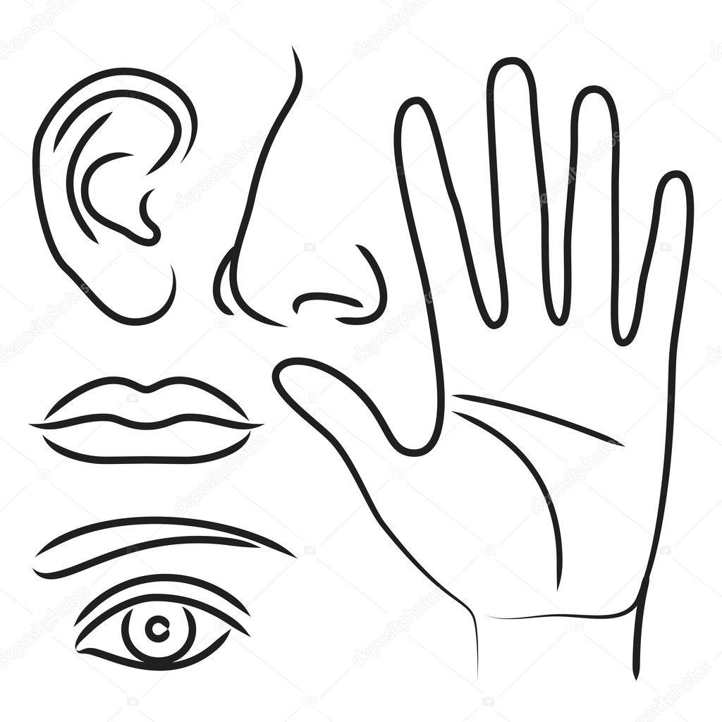 Mano Di Organi Sensoriali Naso Orecchio Bocca E Occhi
