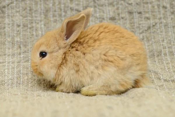 新生兒棕兔 — 圖庫照片©Inna_Astakhova#27231551