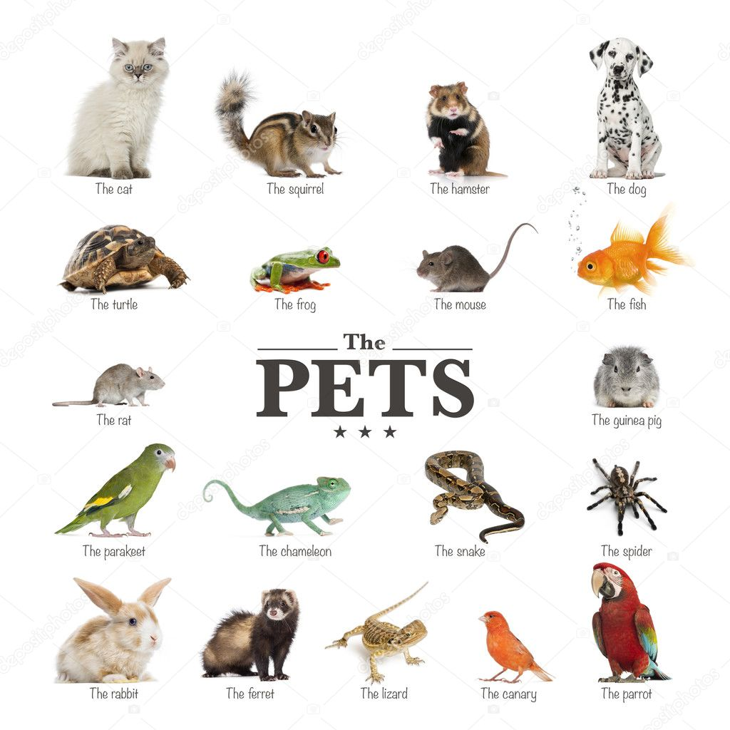 Cartaz De Animais De Estimacao Em Ingles