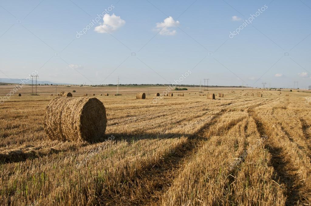paesaggi agricoli  Foto Stock  zhekoDZ 12482738