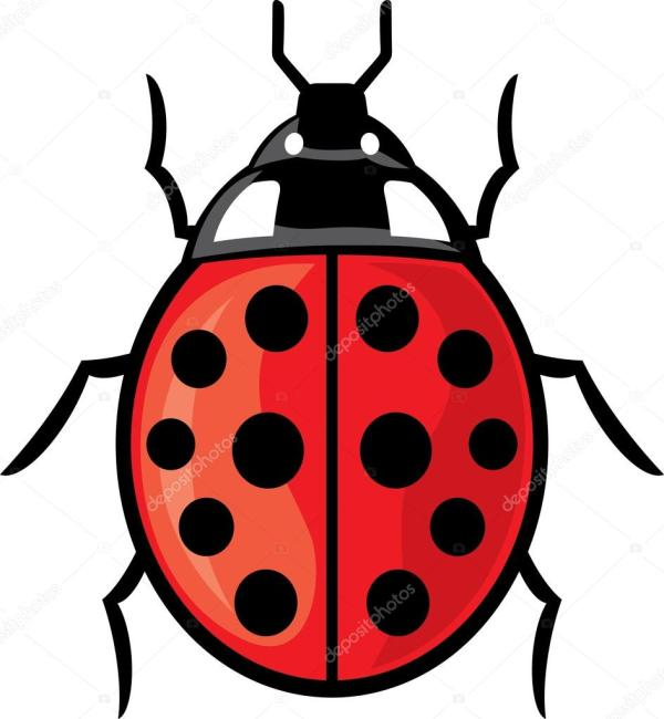 ladybug vector illustration of