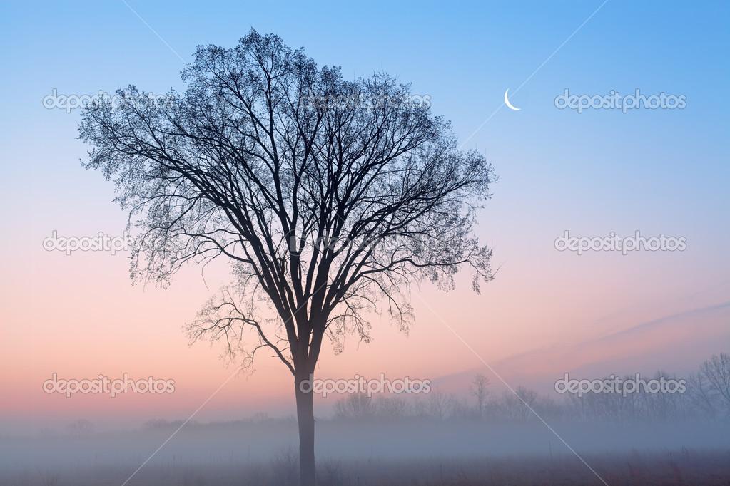 Alba alberi spogli e falce di luna  Foto Stock  dpenn