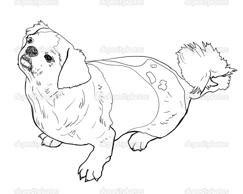 Cute Shih Tzu Coloring Pages Coloring Pages
