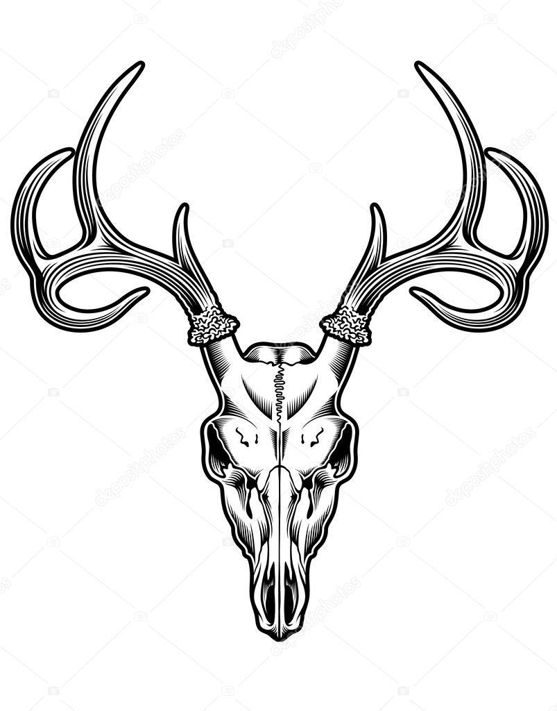Deer Skull Vector : skull, vector, Skull, Vector, Image, Vectorfreak, Stock, 31673991