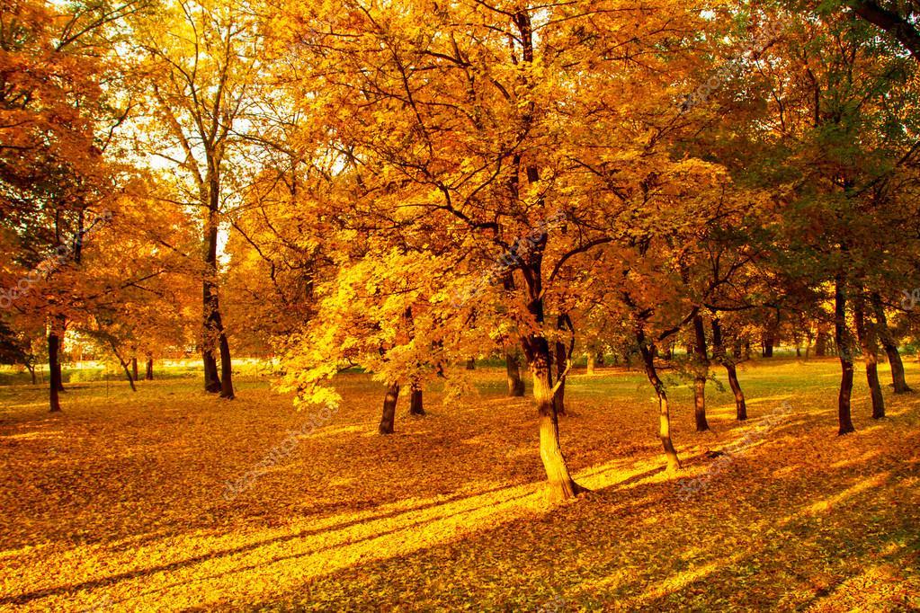Fall Landscape Free Wallpaper Jesienne Krajobrazy Zdjęcie Stockowe 169 Nagydodo 18694237