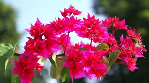 「india flowers」の画像検索結果