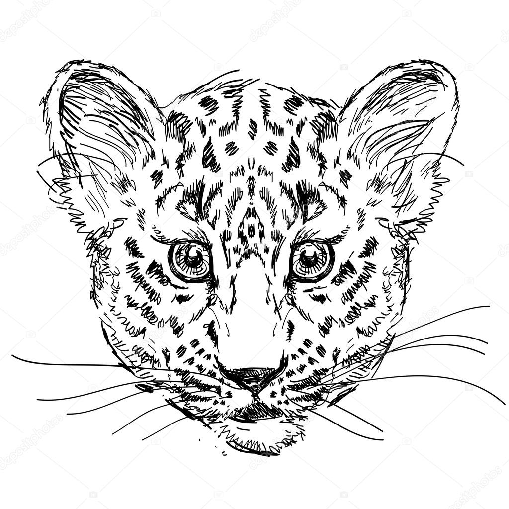 Leopard In Vector On White Background Cat Hand Drawn