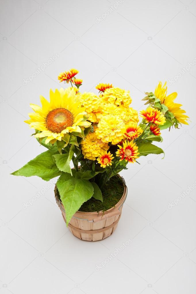 August Blumen  Stockfoto  derekhatfielddesigncom 46404961