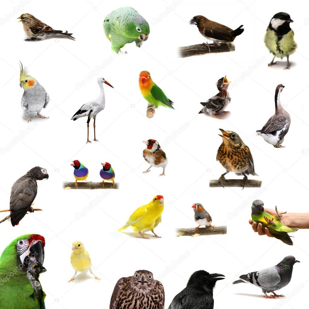 Imagenes Grupo De Aves