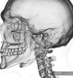 illustration of temporomandibular joint in human skeleton on white background stock photos [ 1800 x 1800 Pixel ]