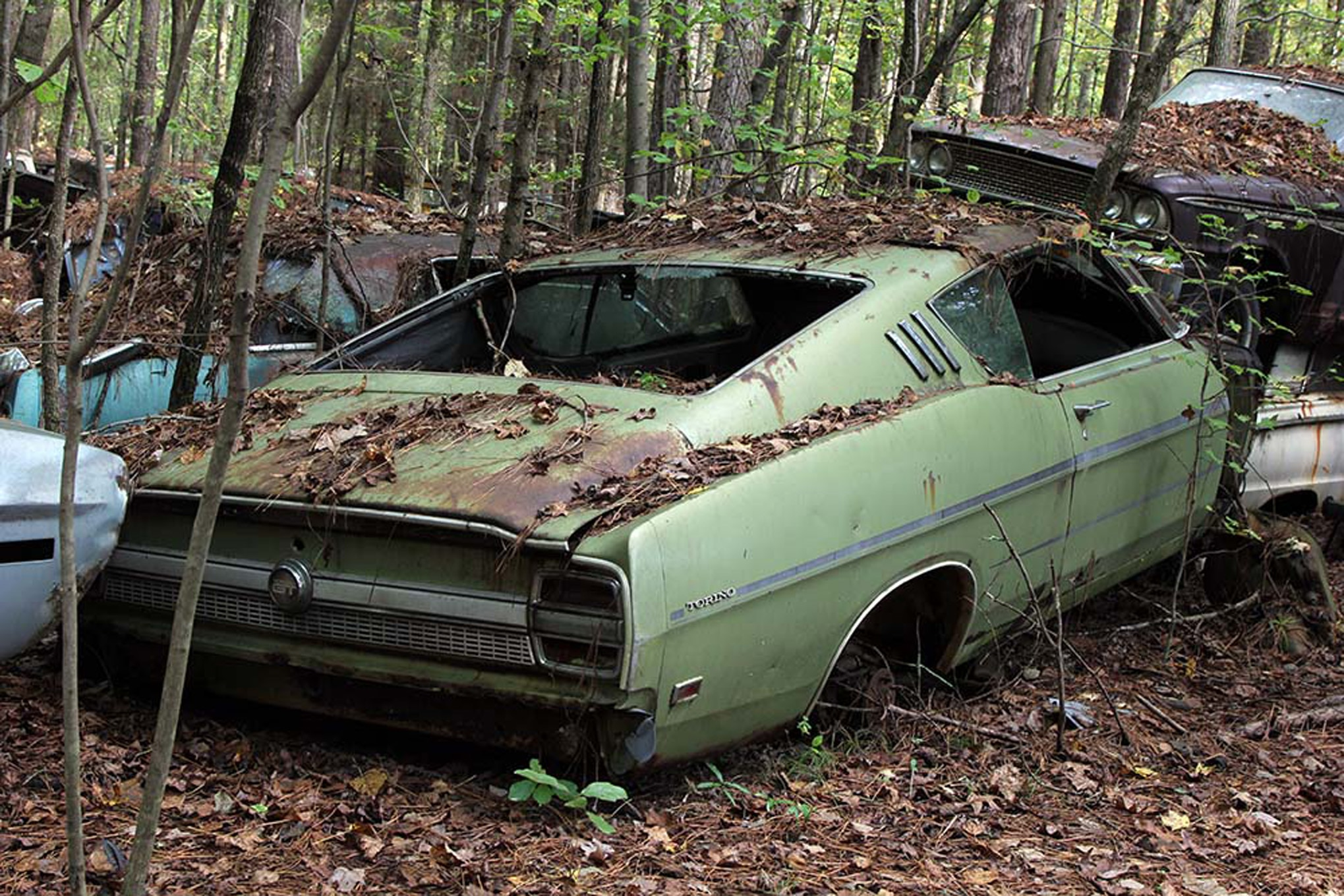 Old Abandoned Muscle Cars