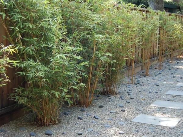 great design plant alphonse karr