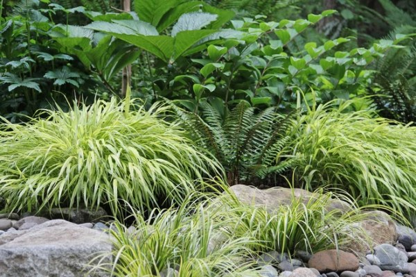 ideas landscaping wet shady