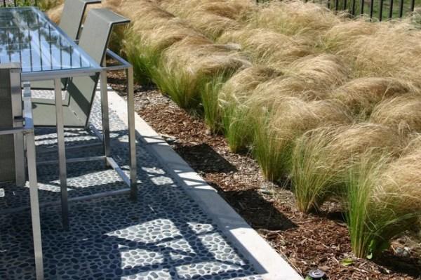 ornamental grasses in landscape