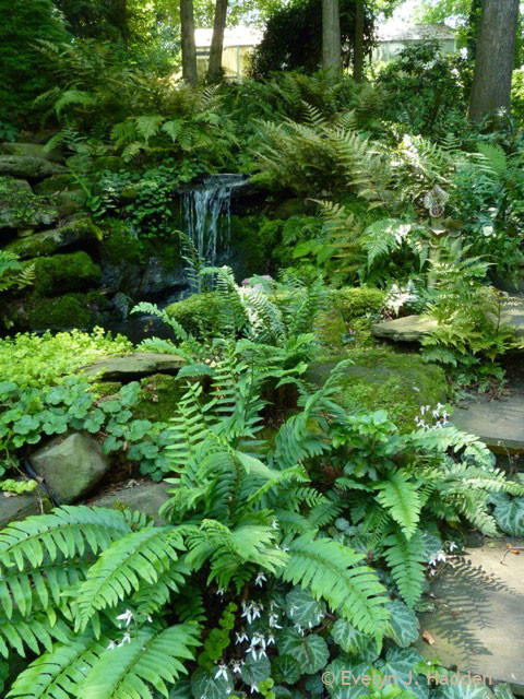 68 Best Images About Woodland Garden On Pinterest Gardens Hosta