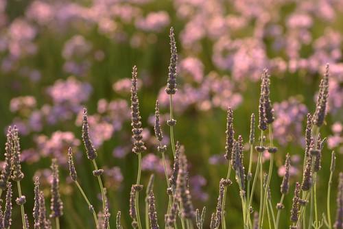 Garden design in Greece on the island of Paros mediterranean landscape
