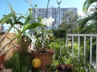 Balcony Garden - Tropical - Patio - miami