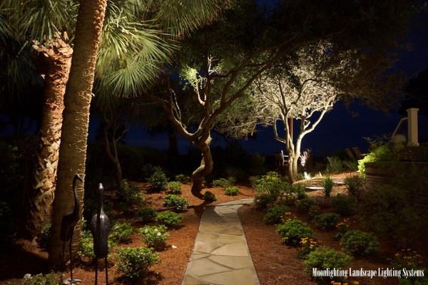 Moonlighting Sets A Sea Pines Landscape Aglow