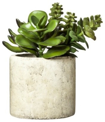 Floral Table Arrangement Green Mixed Succulent Contemporary Indoor Pots And Planters By