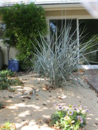Pet Friendly And Contemporary Landscaping Ideas - Easy ...