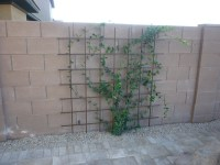 Wall Mounted Trellis w/ Jasmine
