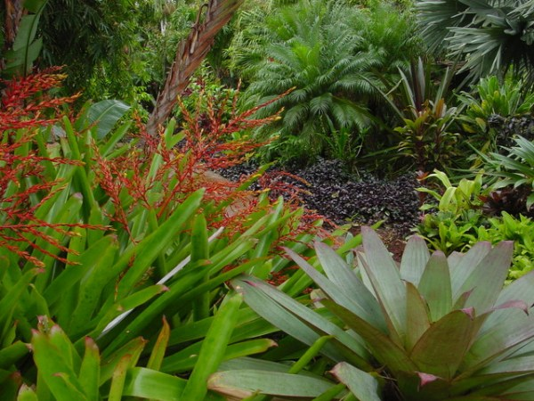 tropical garden design - contemporary