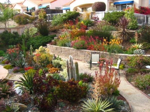 tiered drought-tolerant pismo beach