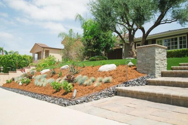 drought tolerant planting - tarzana