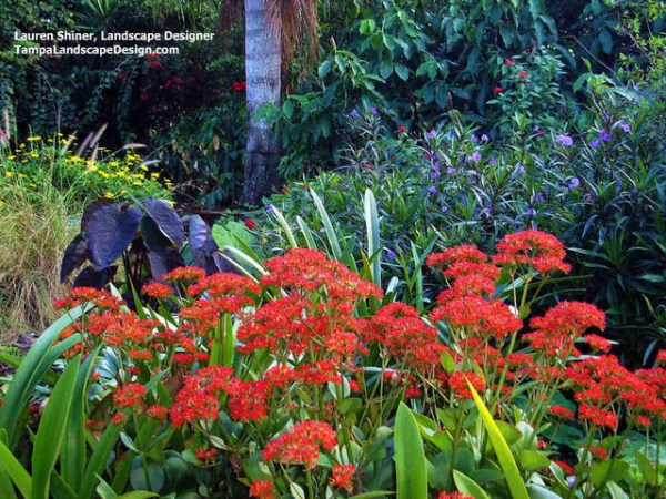 carrollwood cottage garden - tropical