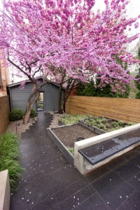 Small Backyard Ideas No Grass - Add Value to Your Home
