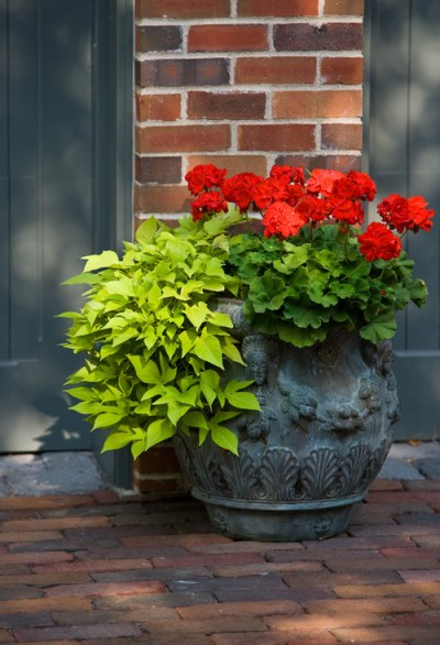 Container Gardening | Whats Ur Home Story