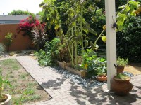 Pet Friendly And Contemporary Landscaping Ideas | Home ...