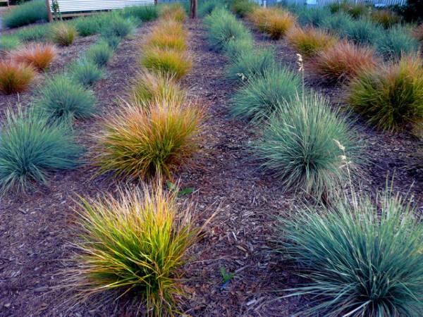 grasses close - modern landscape