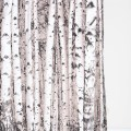 Birch tree shower curtain contemporary shower curtains by urban