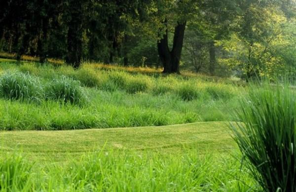 grasses chanticleer 1