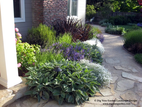 plant combinations - northern california