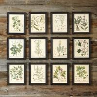 Heines Botanical Framed Art - Traditional - Prints And ...