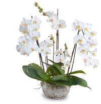 White Phalaenopsis Orchid Arrangement - Traditional ...