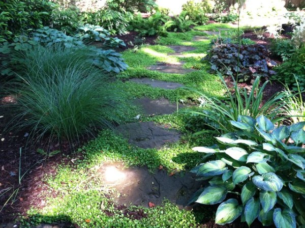 small shady backyard - traditional